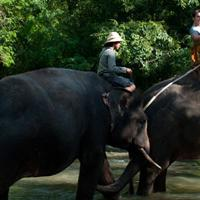 Elephant Expedition