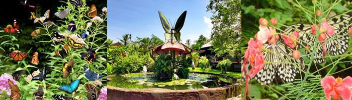 BALI BUTTERFLY JATILUWIH RICE TERRACE TOUR PACKAGE | EPICA
