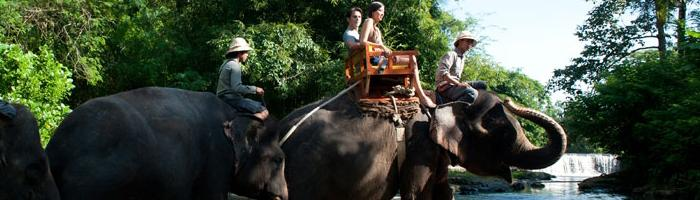 Elephant Riding On The River