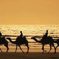 Riding Camel In Bali Tours Activity